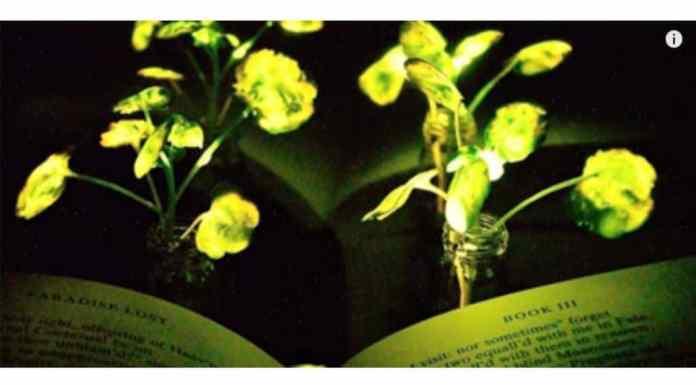 plantas que emiten luz