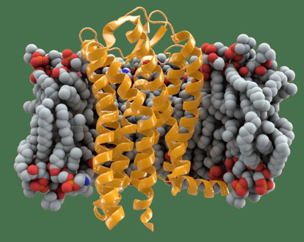 CCR5 gen y el sida