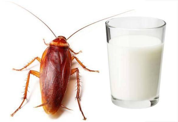 leche de cucuaracha el futuro