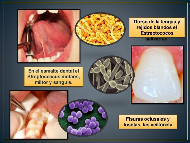 principales bacterias boca
