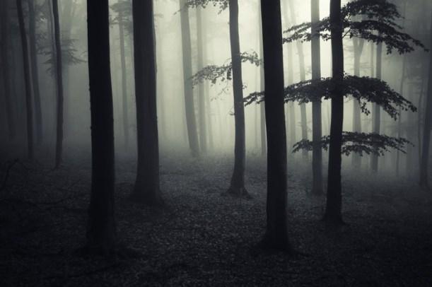 misteriosos bosques