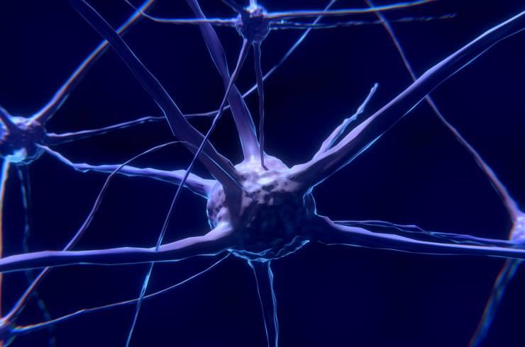el cerebro no es el único órgano que tiene neuronas