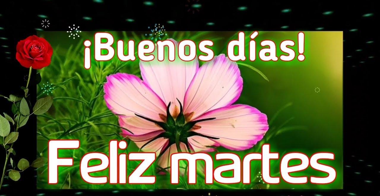 Feliz Martes 111 1