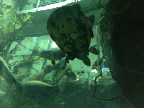 The aquarium at the Academy of Sciences