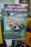 Aprablu - Associação de Proteção aos Animais de Blumenau/SC