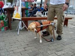 Adoção 05 - Cachorrinha Kika