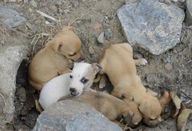 Quem tiver interesse em adotar um dos filhotes, por favor, entrar em contato com Catarina pelo telefone (47) 3338-0938.