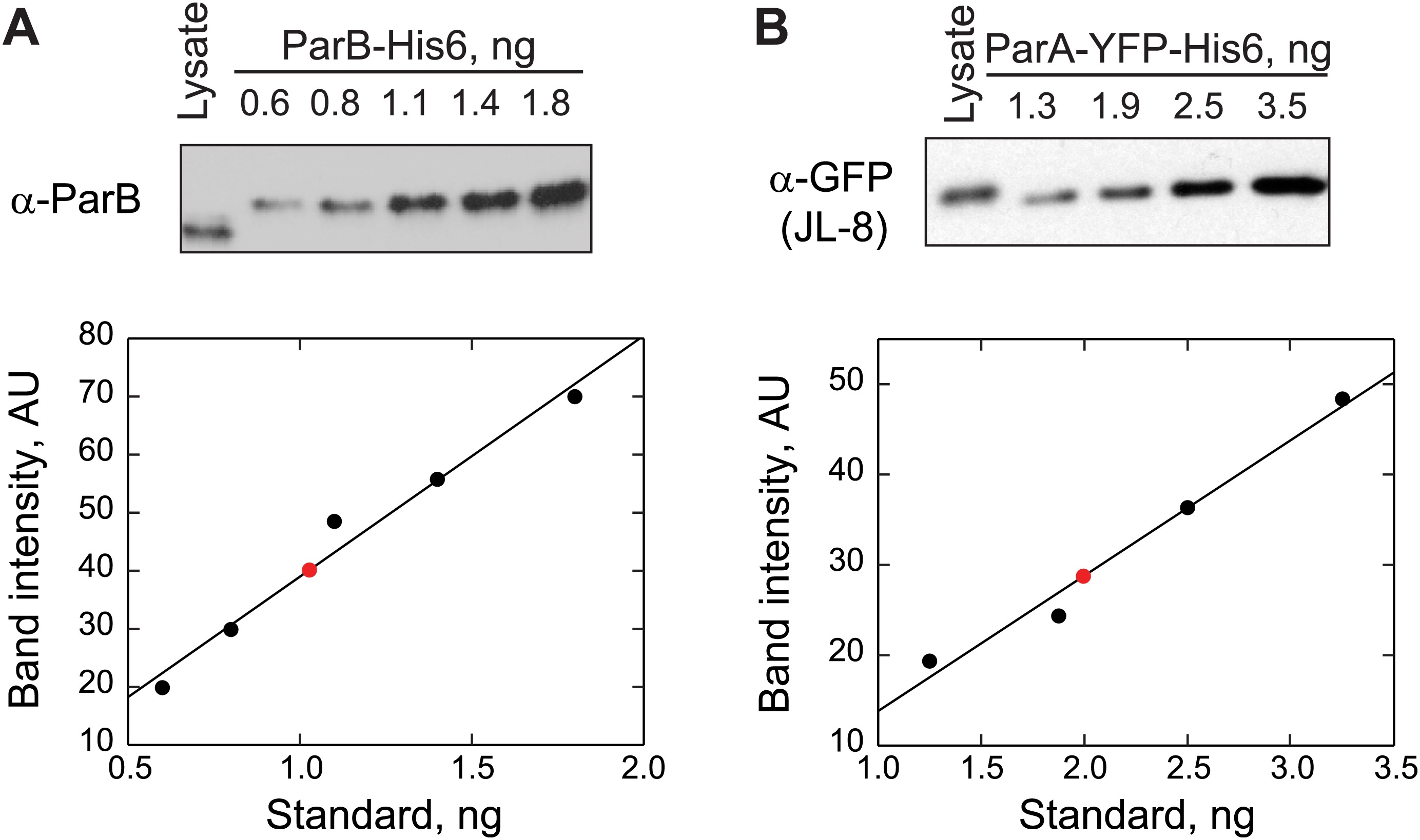 Evidence For A Dna Relay Mechanism In Parabs Mediated Chromosome Segregation