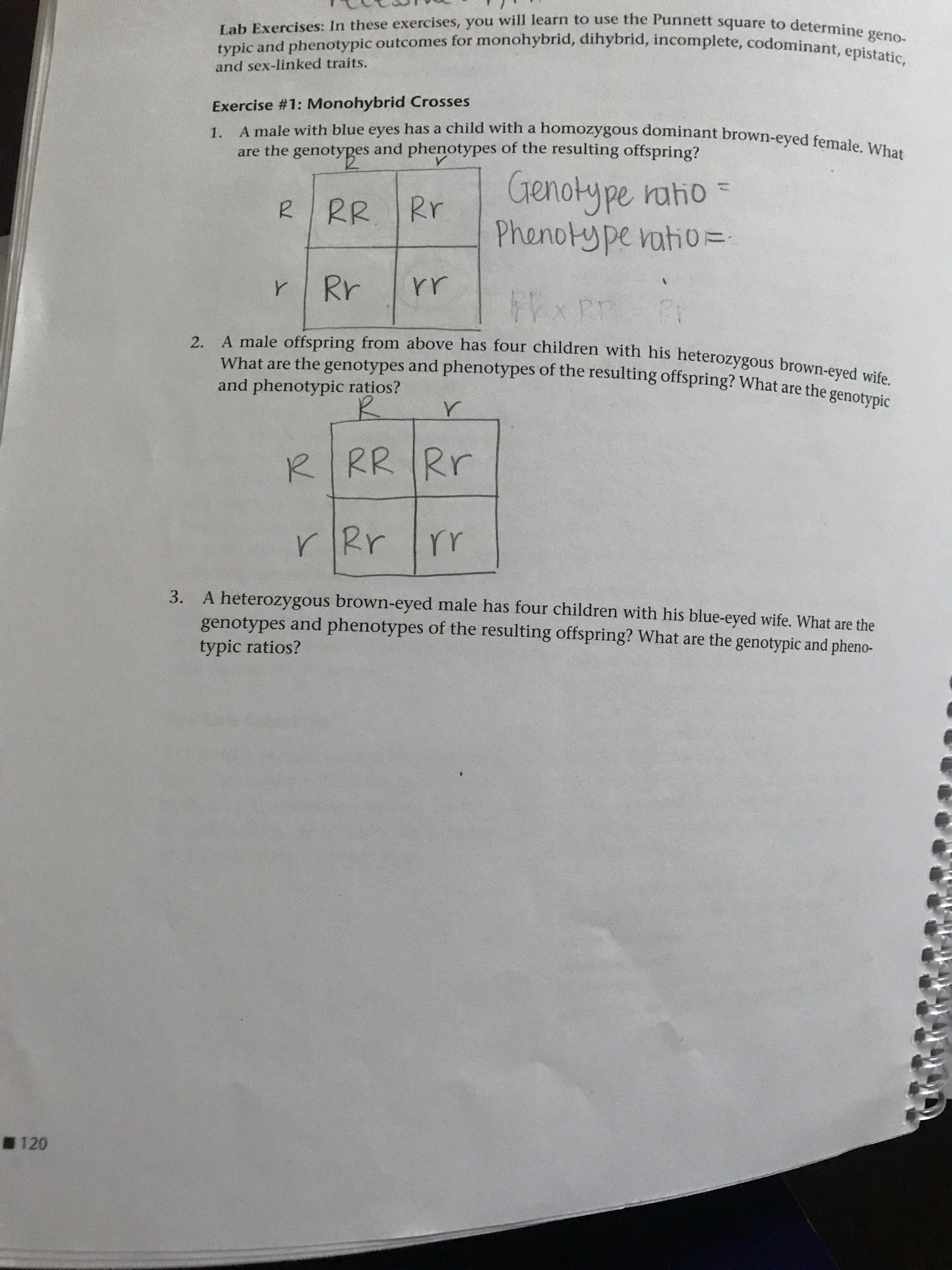 Answered Lab Exercises In These Exercises You