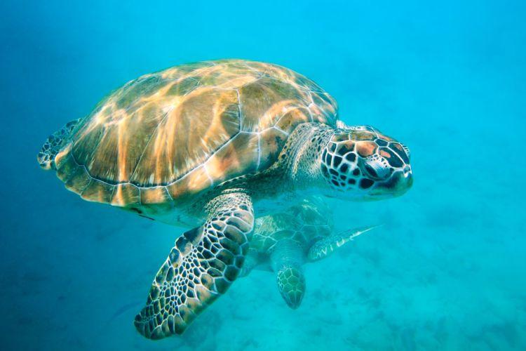 Wildlife holidays to Tanjong Jara resort and Kenwood Travel