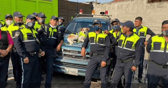 Facebook viral: police officers end up adopting a dog without a home while patrolling the streets during the quarantine period.   Photo: Capture