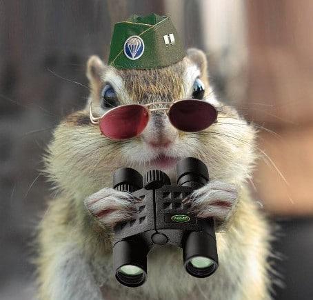 12 esquilos por suspeitas de serem espiões - curiosidades