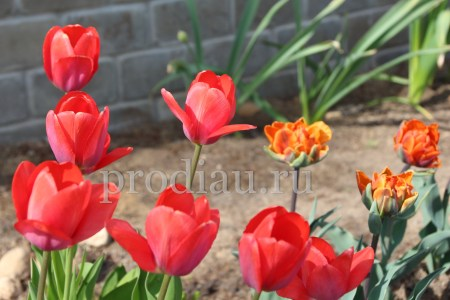 садовые цветы в мае (видео)