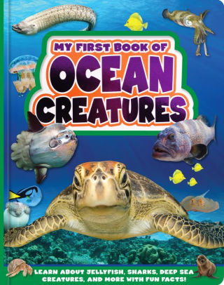 My First Book Of Ocean Creatures By Flying Frog Board Book Barnes Noble