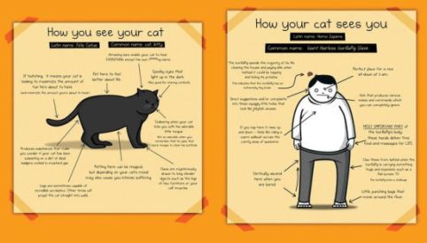 Image result for How to Tell If Your Cat Is Plotting to Kill You