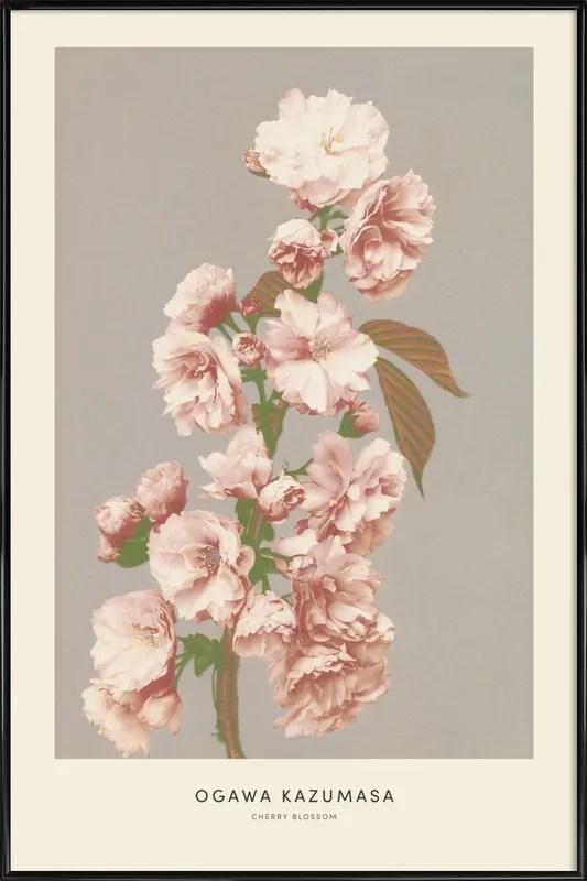 kazumasa cherry blossom poster