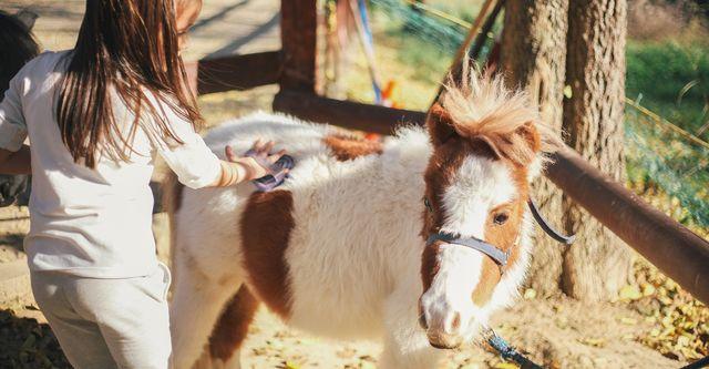 The 10 Best Pony Rides In Tucson Az With Free Estimates