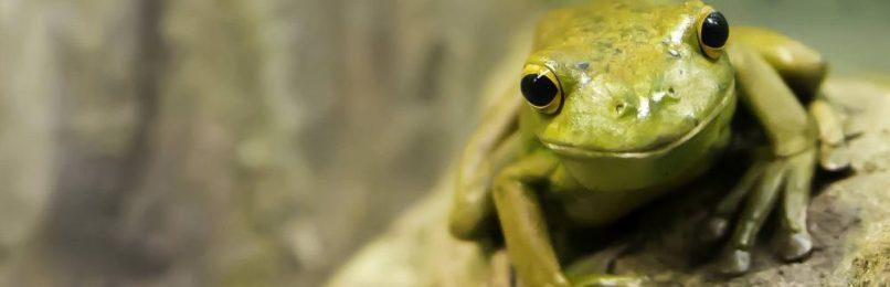 zeitmanagement-eat-the-frog