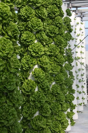 [Productive Hobbies] Vertical Gardening: Take It to New Heights (Part 2) | Productive Muslim