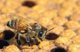 Abejas y pesticidas