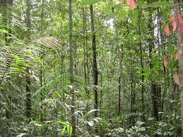 Deforestación Brasil