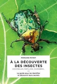 découverte des insectes