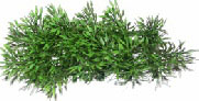 Jungle Plant 8