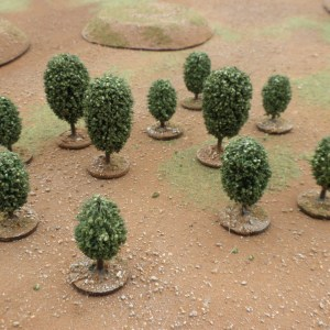 Orbicular Tree small