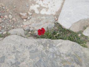 Flower Amid the Ruins