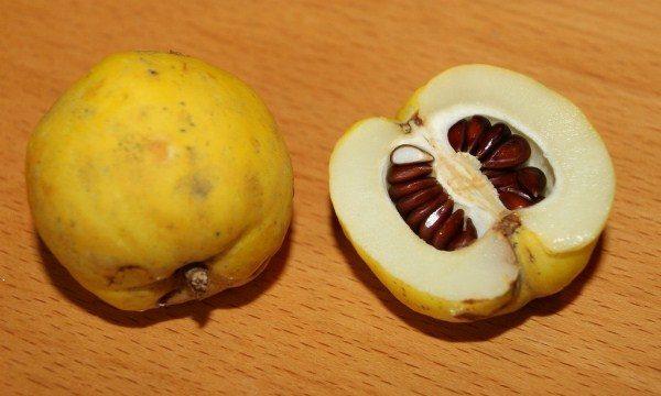Айва – полезные и целебные свойства спелого плода. Как выбрать хурму, айву и фейхоа: полезные советы