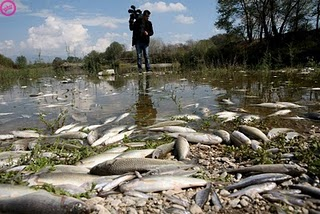 peixos morts