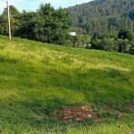 Terreno no urbanizable en Sopelana Profesiolan 151