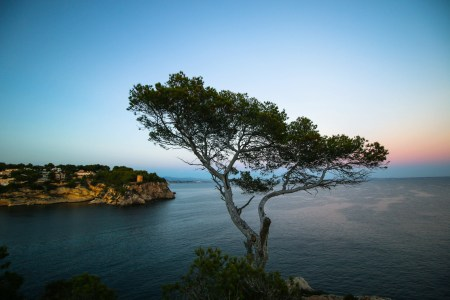 Pinos sobre el mar mediterráneo en Mallorca