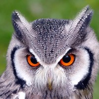 Evolutionary Theory: Why Are Owls So Bloody Wise?