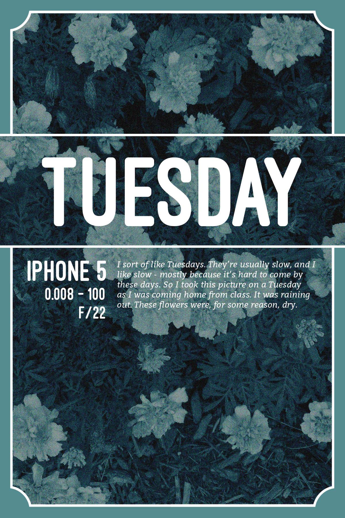 TuesdayIllust-2