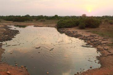 Foto: Volney Albano - Lagoa abastecida por caminhões pipa se torna último refúgio para animais