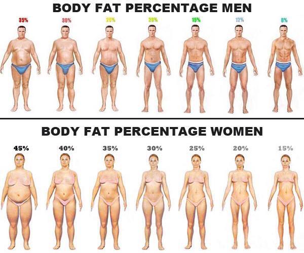 Peratus Lemak Badan Anda