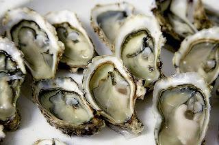 american oyster makanan laut sedap