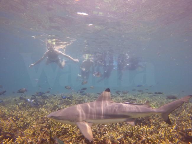skuba diving di pulau semporna