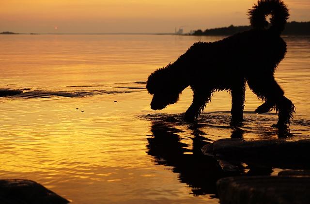 Hunde spiegeln unsere Seelen