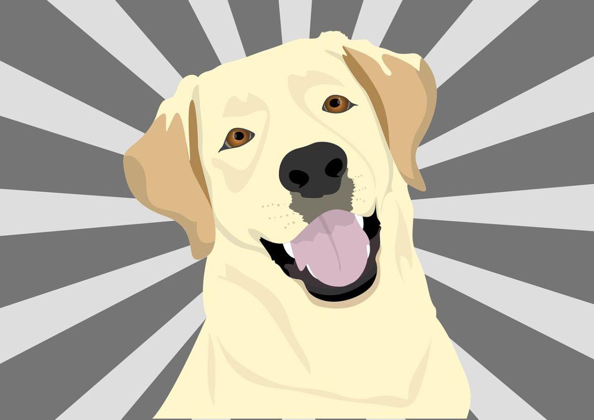Projekt Superhund: Ein Bärendienst von Sat1