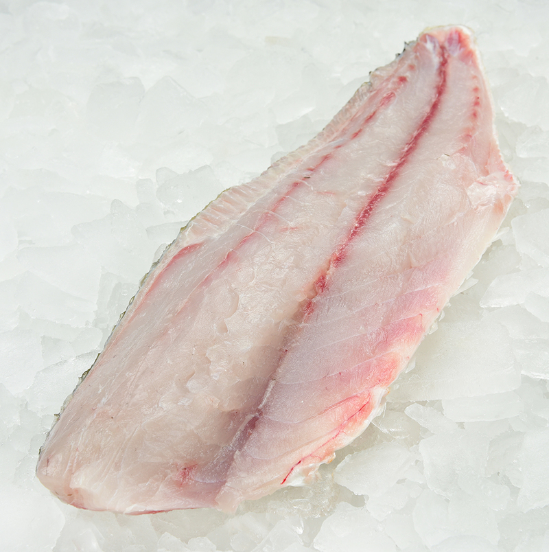 What Fresh Farmed Steelhead Fillet