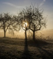 morning dew - s