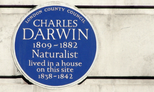 Charles Darwin Blue Plaque on Gower Street London WC1, by Professor Joe Cain