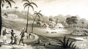 """Mibiri Creek, Demerara River 