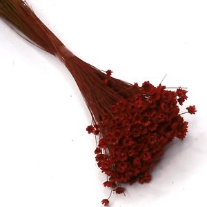 Glixias (flores secas mini) bordeaux