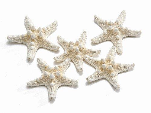 Estrela do mar branca 10 unidades 5/7cm
