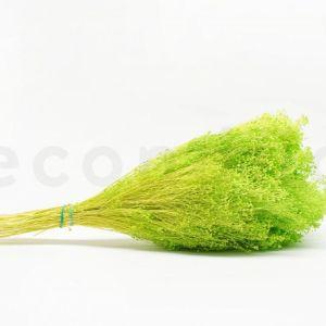 Broom Bloom 200gr 5