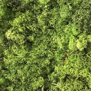 Musgo preservado verde