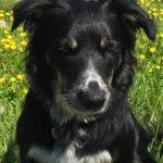 Polo, kontorhund hos Jydsk Emblem Fabrik A/S
